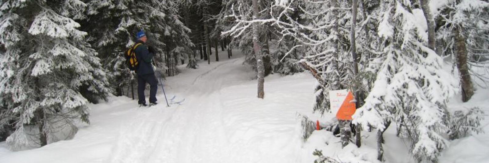 Skijegern - bestill her!